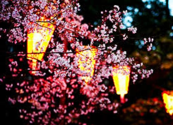 Fanfic / Fanfiction Flores para Han Jisung - Capítulo 2 - Explicações e o Primeiro Encontro