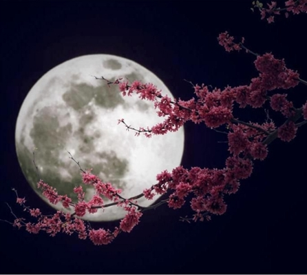 Fanfic / Fanfiction Friendship and a secret - Capítulo 45 - Lua cheia!!!!!