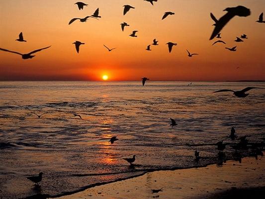 Fanfic / Fanfiction Poesias em Pequenos Versos - Capítulo 1 - Mar Árduo dos Pássaros