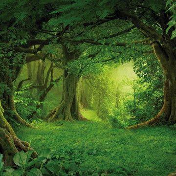 Fanfic / Fanfiction Seta da vingança - Capítulo 5 - Floresta Madeira Verde