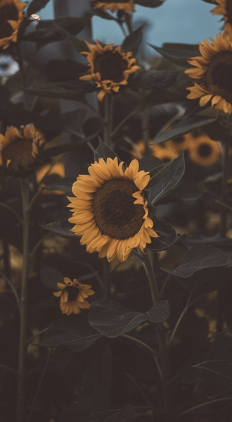 Fanfic / Fanfiction Jardim das belas flores - Capítulo 2 - Girassol