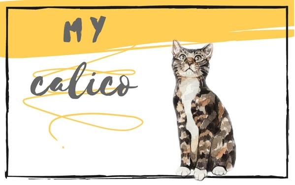 Fanfic / Fanfiction Calico Cat - One-Shot - Capítulo 1 - Capítulo Único - My Calico
