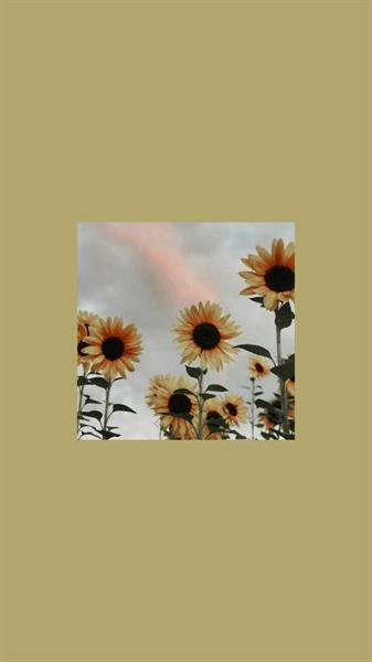 Fanfic / Fanfiction Forbiden Love (Imagine - Hwang Hyunjin) - Capítulo 15 - Ciúmes
