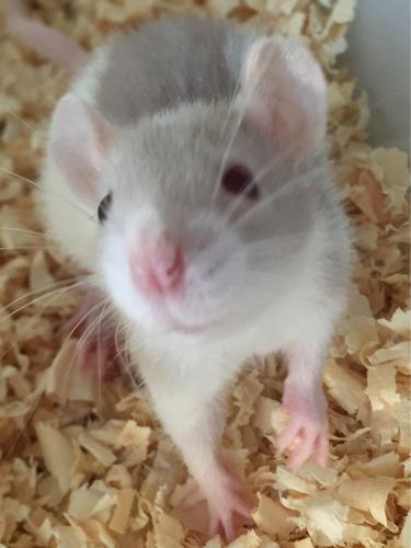 Fanfic / Fanfiction Ruína da mascara humana - Capítulo 3 - A ratinha chamada Vida
