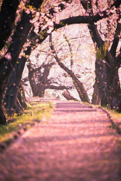 Fanfic / Fanfiction A hundred ways to love you (Jackson Wang - Got7) - Capítulo 1 - A flor de cerejeira brotou...