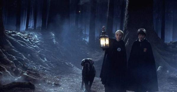 Fanfic / Fanfiction Apenas uma sangue ruim- Draco Malfoy - Capítulo 19 - A floresta proibida