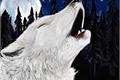 História: Lobo alfa