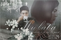 História: Mulata (Jungkook - BTS)