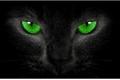 História: Black Cat