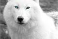 História: White Wolf