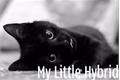 História: My Cat - Mitw
