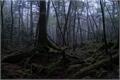 História: The Secret Besides the Forest