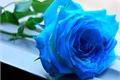 História: A Rosa Azul