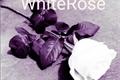 História: WhiteRose - Rosa Branca