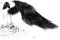 História: Black Wings