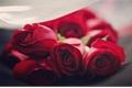 História: Rosas Vermelhas
