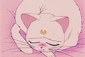 História: .cute kitty