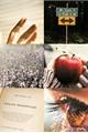 História: Échame La Culpa
