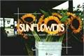 História: Sunflowers
