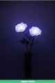 História: Purple Rose - Imagine Kpop