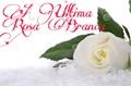 História: A Última Rosa Branca