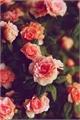 História: Seven roses - Taeseok-Vhope