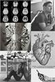 História: The Anatomy of the Heart