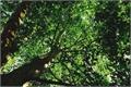 História: Árvores