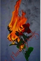 História: Like Flaming Petals...