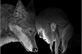 História: The Wolf ( interativa kpop )