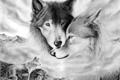 História: My little wolf
