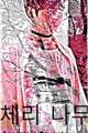 História: Cerejeira-(JiKook)