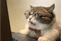 História: My cat - Yoonseok (oneshot)