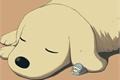 História: .puppy; kim jungwoo