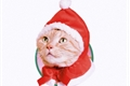 História: Yule Cat