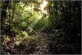 História: A Floresta proibida (Universo Harry Potter)