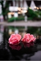 História: Chuva de Primavera
