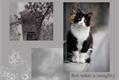 História: Gato