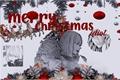 História: Merry Christmas idiot.