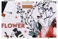 História: Flower;;