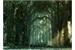 Fanfic / Fanfiction Uma aventura na floresta