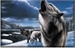 Fanfic / Fanfiction Os lobos de secretFalls