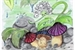 Fanfic / Fanfiction Flor Branca e o Cogumelo Andarilho