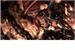 Fanfic / Fanfiction O Pequeno Demônio