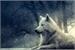 Fanfic / Fanfiction O Lobo Siberiano