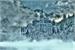 Fanfic / Fanfiction As crônicas de inverno (interativa)