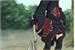 Fanfic / Fanfiction Problemas na Akatsuki