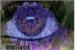 Fanfic / Fanfiction Hortênsia Violeta - Crônica