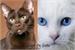 Fanfic / Fanfiction Um amor de gatos-Mitw