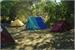 Fanfic / Fanfiction Acampamento